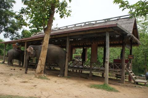 ラオス・ルアンパバーンの象画像