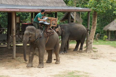 象の背中に椅子をセットしている画像